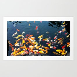 Colorful carp in the pond Art Print