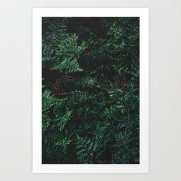 Thick Underbrush Art Print