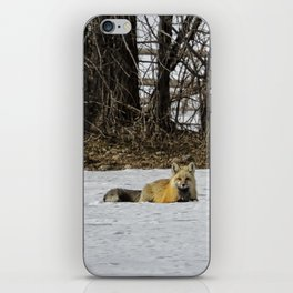 Beautiful Red Fox - No. 3 iPhone Skin