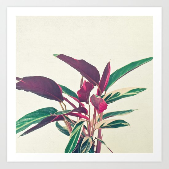 Prayer Plant Art Print