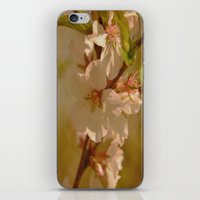 cherry blossoms iPhone & iPod Skins featuring Cherry Blossoms by Dorothy Pinder