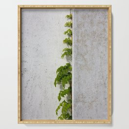 Wisteria climbing white plastered wall Serving Tray