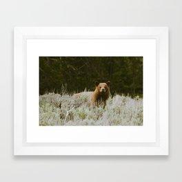 Bush Bear Framed Art Print