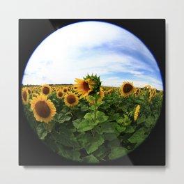 Sunflower 24 Metal Print
