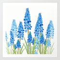 blue grape  hyacinth forest by colorandcolor