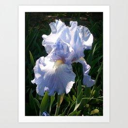 Purple Iris Blossom Art Print