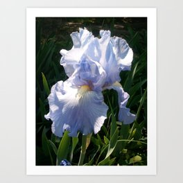 Purple Iris Blossom Art Print
