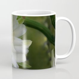 Cereus Morning  Coffee Mug