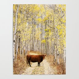 Cow in aspens Poster