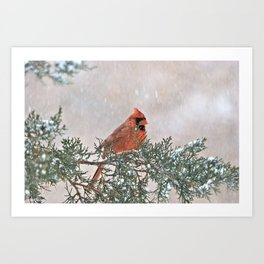 Snowfall Cardinal Art Print