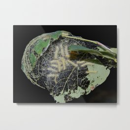 Tent caterpillars Metal Print