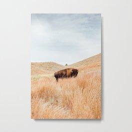 The Bison Metal Print