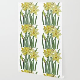 Watercolor Daffodils Botanical Illustration Wallpaper