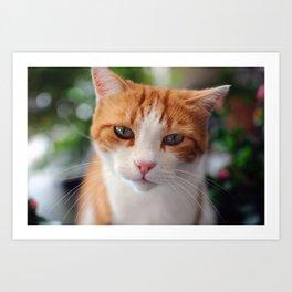 Garfield - a red cat Art Print