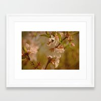 cherry blossoms Framed Art Prints featuring Cherry Blossoms by Dorothy Pinder