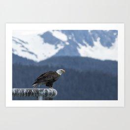 Bald Eagle of Resurrection Bay, No. 1 Art Print