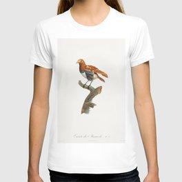 Paradise crow male from Histoire Naturelle des Oiseaux de Paradis et Des Rolliers (1806) by Jacques T-shirt