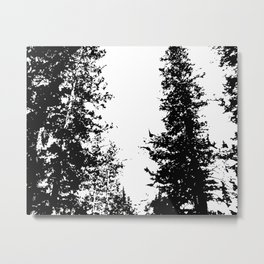 Colorado Pines Black and White Metal Print