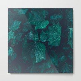 Dark emerald green ivy leaves water drops Metal Print
