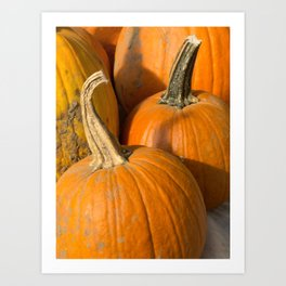 Line up of Orange Pumpkins Art Print
