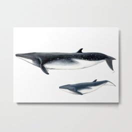 Bryde´s whale and baby whale Metal Print