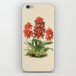 R. Warner & B.S. Williams - The Orchid Album - vol 01 - plate 004 iPhone Skin