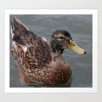 ducks Art Prints featuring ducks by slimblue