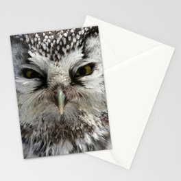 Boreal owl close up Stationery Cards