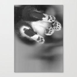 Cat Scan III Canvas Print