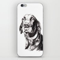 charlie iPhone & iPod Skins featuring Charlie by Hana Robinson