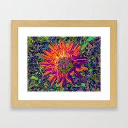 "Extreme Dahlia ""Weston Spanish Dancer"" Framed Art Print"