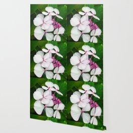 White Summer Hydrangea Wallpaper