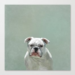BILL the Bulldog Canvas Print