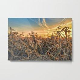 Sunset over corn field Metal Print