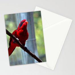 Blue-Streaked Lory Stationery Cards