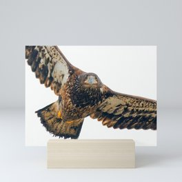 Young Bald Eagle in Breathtaking Flyby Mini Art Print