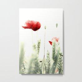 Poppy Poppies Mohn Mohnblume Metal Print