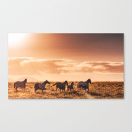 wild horses in australia Canvas Print