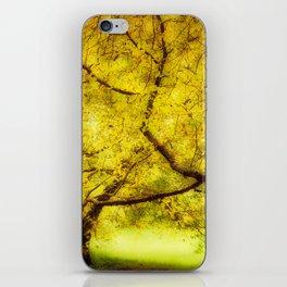 Arboretum Trees iPhone Skin