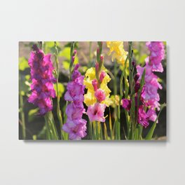 Multi-Colored Gladiolus Metal Print