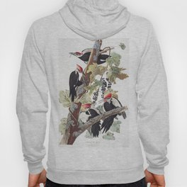 Pileated woodpecker edit, Birds of America, Audubon Plate 111 Hoody