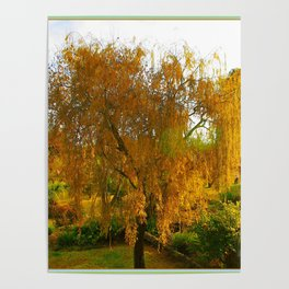 Our Golden Willow Poster