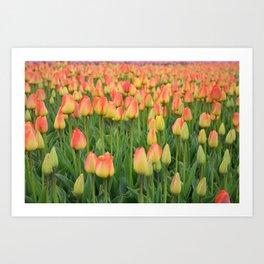 Tulips #1 Art Print