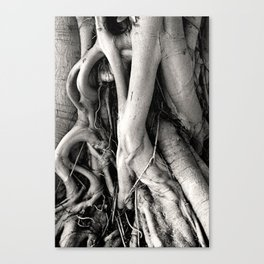 Root Of The Root Canvas Print