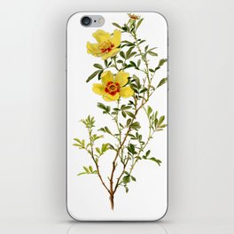 Rosa Hardii by Alfred Parsons (part of The Genus Rosa, published in 1914) iPhone Skin