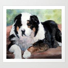 Australian Shepherd at Rest Art Print