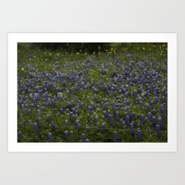 Bluebonnet field Art Print