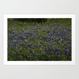 Bluebonnet field Art Print