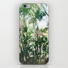 Mexican Palms iPhone Skin