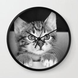 Kitten in a box Wall Clock